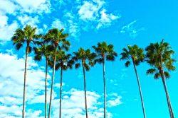 Inpatient Drug Rehab Centers in Apopka, FL