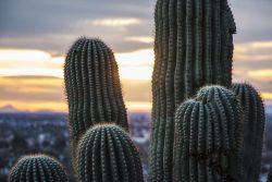 Tucson, AZ Inpatient Rehab